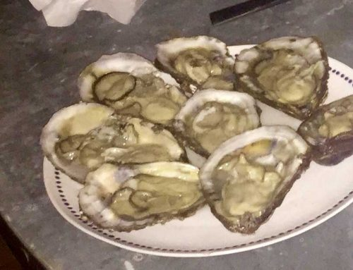 OYSTERS ARE YOUR FRIENDS — The Spin
